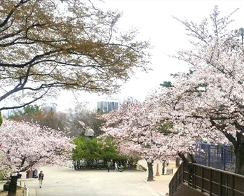 Trải nghiệm du lịch Daegu thực tế 19