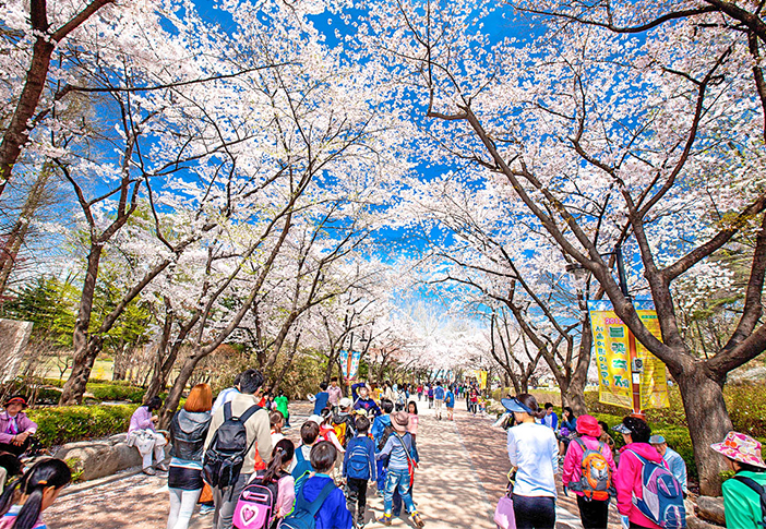 Những con đường hoa mùa xuân ở Seoul