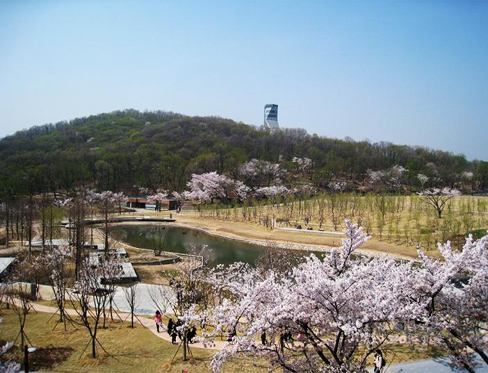 Những con đường hoa mùa xuân ở Seoul 2