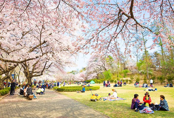 Những con đường hoa mùa xuân ở Seoul 3
