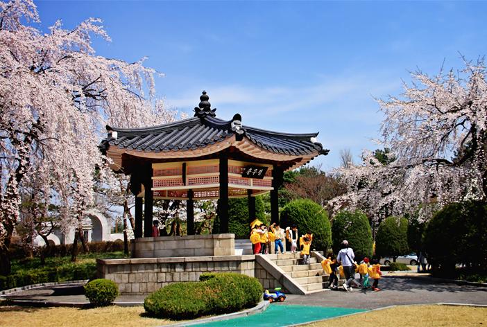 Những con đường hoa mùa xuân ở Seoul 4