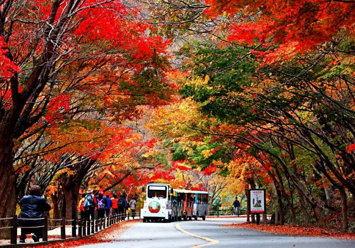 Những con đường Hàn Quốc phủ đầy lá vàng