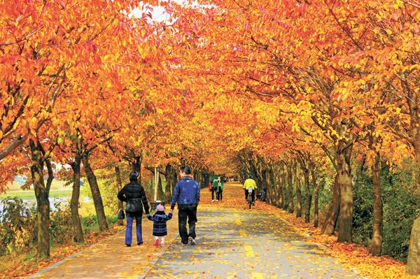 Mùa thu Hàn Quốc với thời tiết mát mẻ, dễ chịu