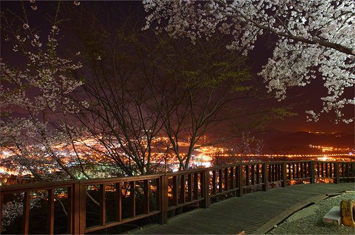 Góc nhìn toàn cảnh Jinhae từ đồi Anmingogae