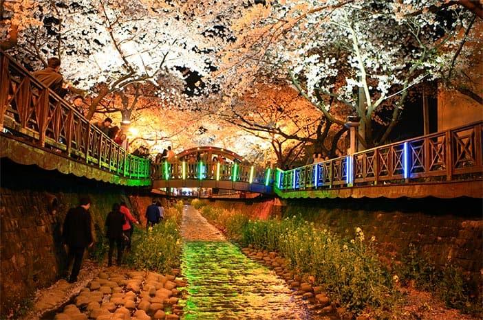 Chuyến đi lãng mạn sắc hoa anh đào ở lễ hội Jinhae Gunhangaje