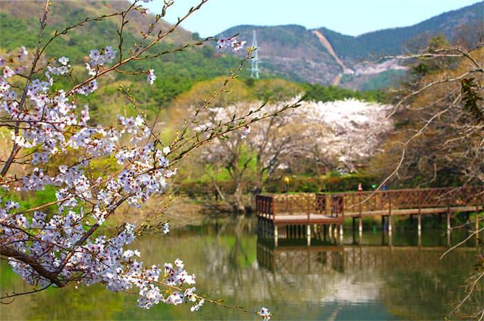 Công viên sinh thái Jinhae NFRDI