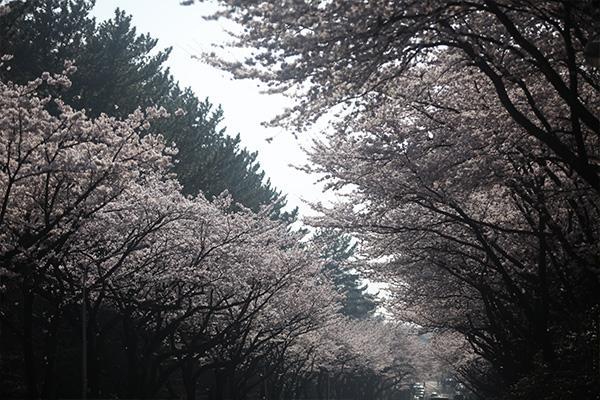 con đường hoa 2