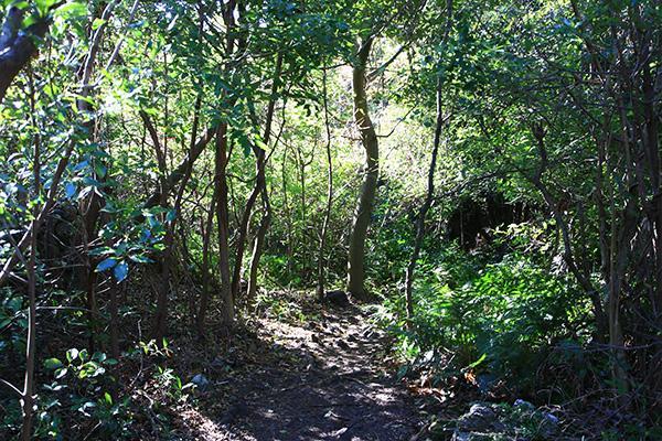 Công viên tỉnh Jeju Gotjawal 4