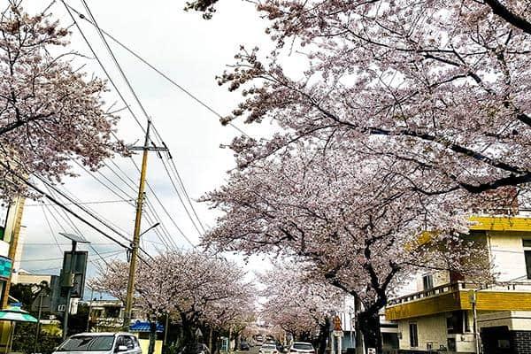 con đường hoa 1