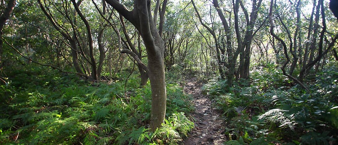 Công viên tỉnh Jeju Gotjawal