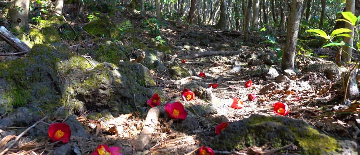 Đường mòn sinh thái ở Núi Hallasan Đường Dongbaek