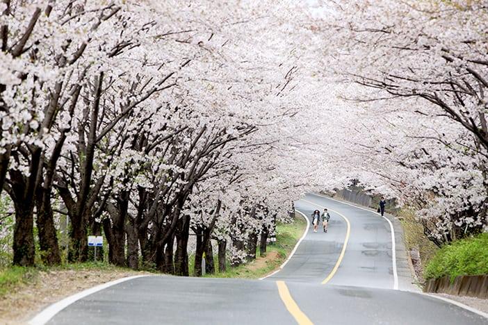 Cẩm nang dành cho lễ hội mùa xuân (Tháng 3 – Tháng 5)