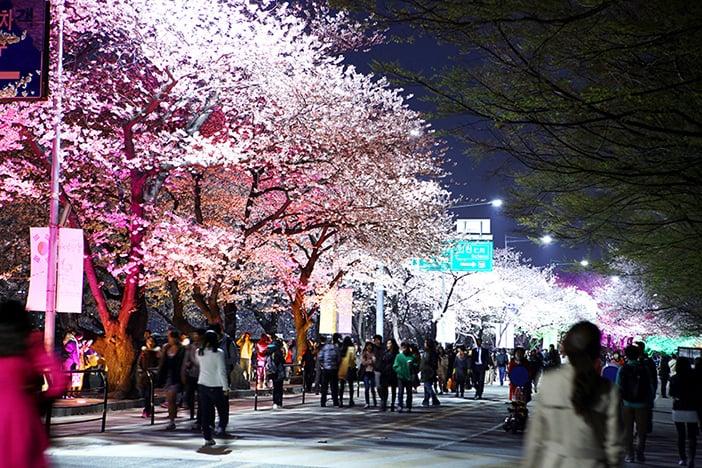 Lễ hội mùa xuân Yeongdeungpo Yeouido