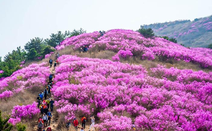 Ngọn núi phủ đầy hoa đỗ quyên, Núi Yeongchwisan