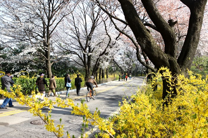 Con đường đi bộ tại công viên Namsan