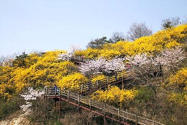 Núi Eungbongsan 2