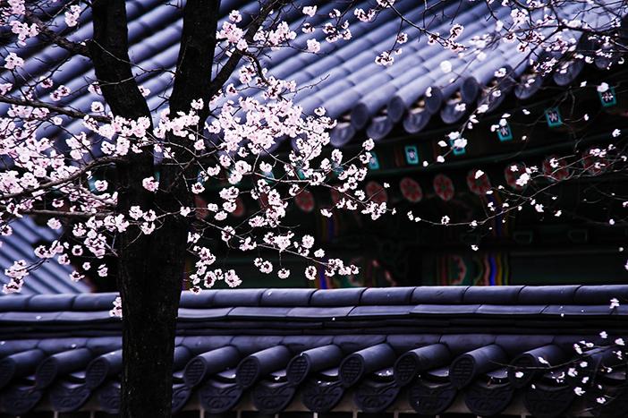 Cung điện & Khu vườn bí mật Changdeokgung