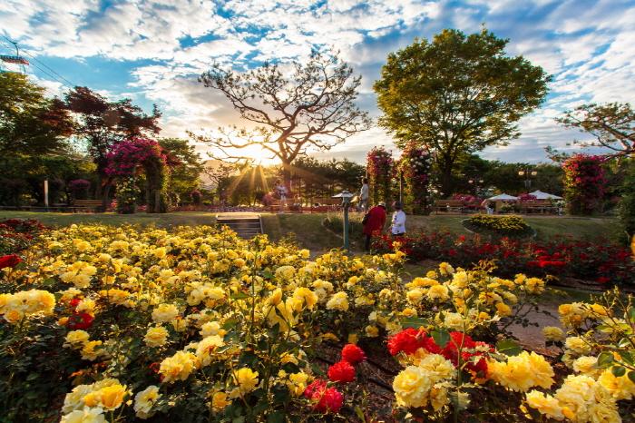 Lễ hội vườn hồng tại Seoul Grand Park