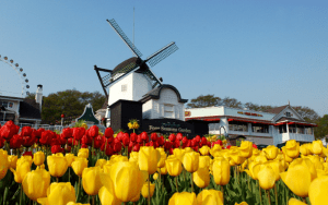 Tận hưởng bầu không khí mùa xuân với Lễ hội hoa Tulip!