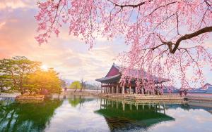 Top 22 địa điểm ngắm hoa anh đào và hoa xuân ở Seoul (Phần 2)