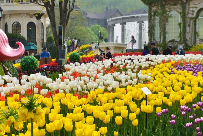 Tận hưởng bầu không khí mùa xuân với Lễ hội hoa Tulip