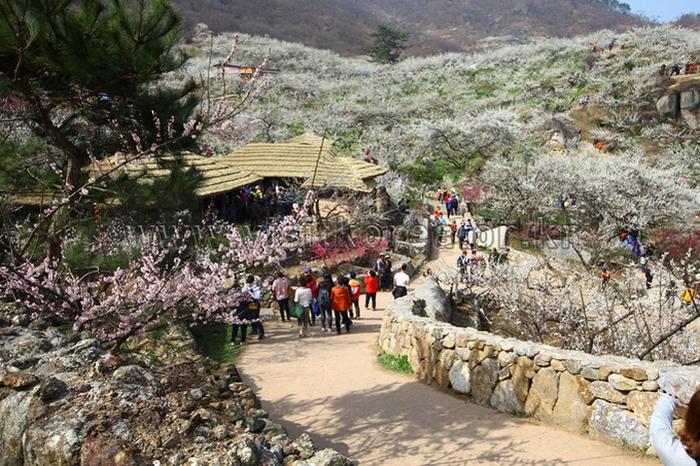 du lịch hàn quốc tháng 3 - 6