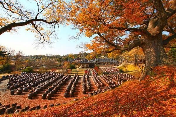 Du lịch Hàn Quốc 15
