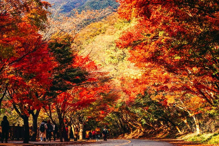 Đến với mùa thu rực rỡ tại Vườn quốc gia Naejangsan