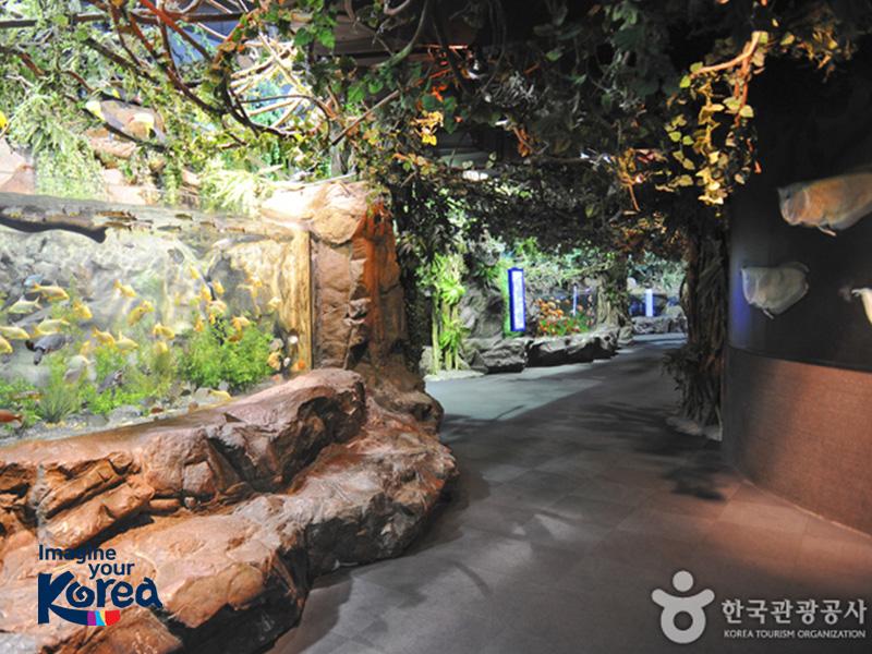 Thuỷ cung Busan Sea Life là thuỷ cung lớn nhất tại Hàn Quốc và hiện là nơi sinh sống của hơn 10.000 sinh vật biển thuộc hơn 250 loài khác nhau