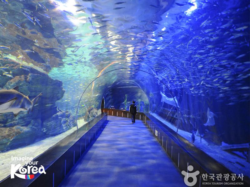 Trải nghiệm cảm giác đi bộ dưới lòng biển tại thuỷ cung Busan Sea Life